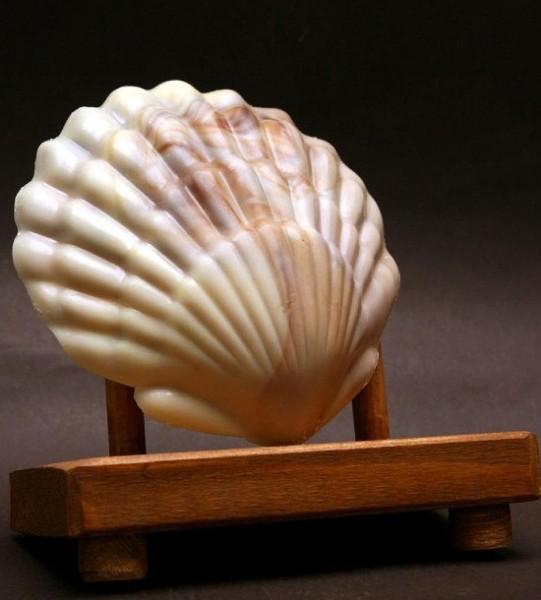 Schokoladenmuschel marmoriert